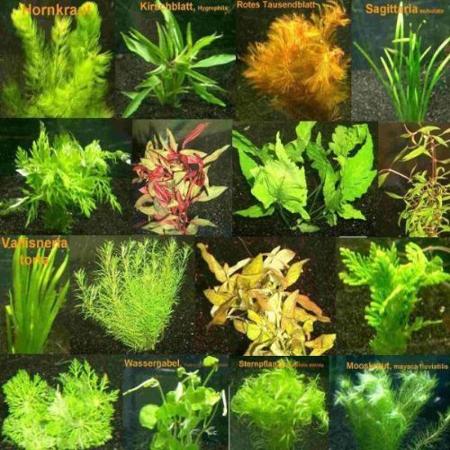 150 Wasserpflanzen